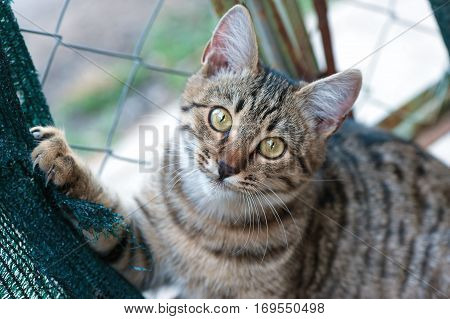 Cute cat with yellow eyes. Close up photo.