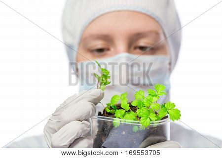 Biologist Exploring A Plant Been Grown In The Laboratory On A White Background