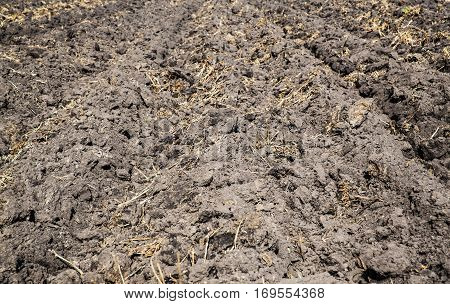 Tillage on the field - soil prepared for seeding plants