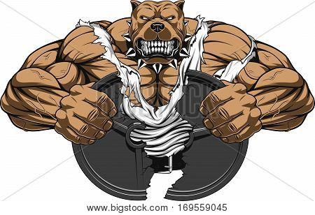 Vector illustration of a strong pitbull with big biceps break barbell bodybuilder