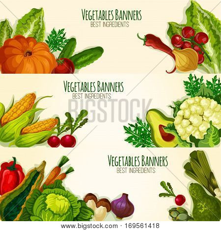 Vegetable banners set with fresh organic veggies cauliflower, asparagus and arugula, avocado, broccoli and bell or chili pepper, tomato, zucchini squash and beet, pumpkin, corn and garlic, onion leek, radish and mushroom. Vector vegetarian farm food