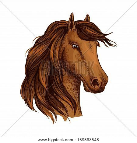 Horse or mustang foal. Young equine mare head vector sketch. Arabian brown stallion symbol for equestrian racing sport, horse riding races club or exhibition contest