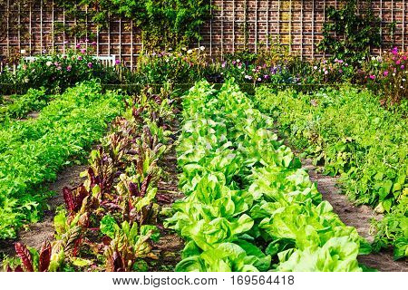Vegetable garden in late summer. Herbs flowers and vegetables in backyard formal garden. Eco friendly gardening