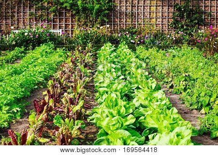 Vegetable garden in late summer. Herbs flowers and vegetables in backyard formal garden. Eco friendly gardening