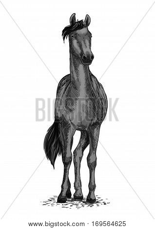 Horse or mustang trotter vector equine symbol for sport races or ride. Racehorse mustang or racer for equestrian sport contest or exhibition