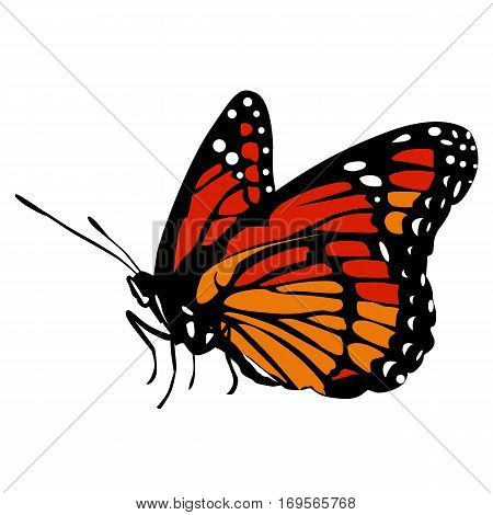 colored icon beautiful black and red orange butterfly on a white background. pattern to decorate the scrapbook album page. vector illustration