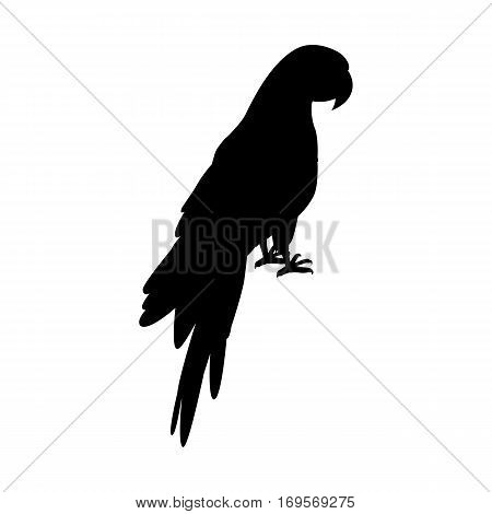 Ara parrot vector. Birds of Amazonian forests in black color. Fauna of South America. Beautiful Ara parrot posters, childrens books illustrating. Isolated on white.