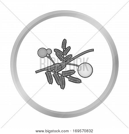 Yellow mimosa flower icon in monochrome design isolated on white background. Australia symbol stock vector illustration.