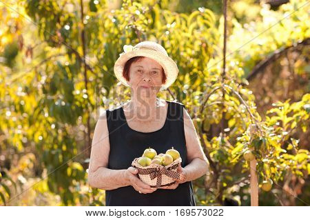 Smiling senior woman 60-70 year old holding basket with green apples in garden. Looking at camera. Spring harvesting.