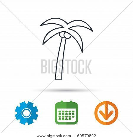Palm tree with coconuts icon. Travel or vacation symbol. Nature environment sign. Calendar, cogwheel and download arrow signs. Colored flat web icons. Vector