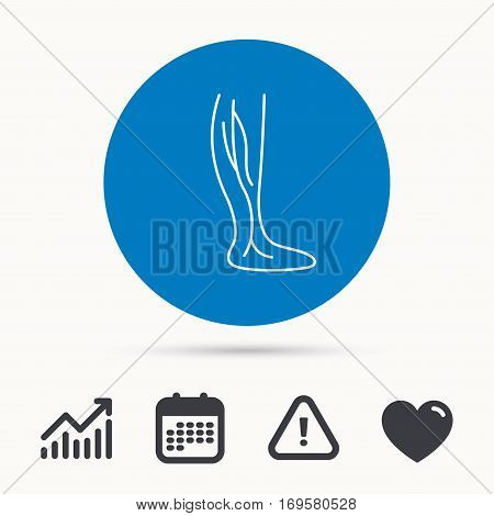 Phlebology icon. Leg veins sign. Varicose or thrombosis symbol. Calendar, attention sign and growth chart. Button with web icon. Vector