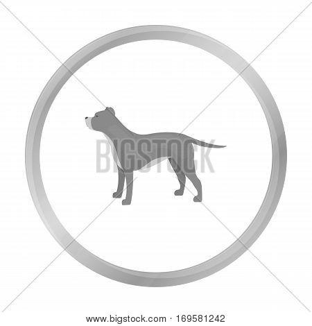 Pitbull vector illustration icon in monochrome design
