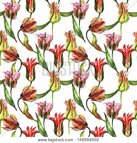 Wildflower tulip flower pattern in a watercolor style isolated. Full name of the plant: tulip. Aquarelle wild flower for background, texture, wrapper pattern, frame or border.