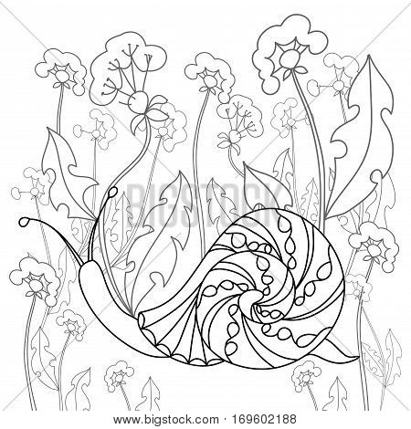 Snail on a field of dandelions. Black and white illustration. Free hand sketch for coloring book page with doodle elements.