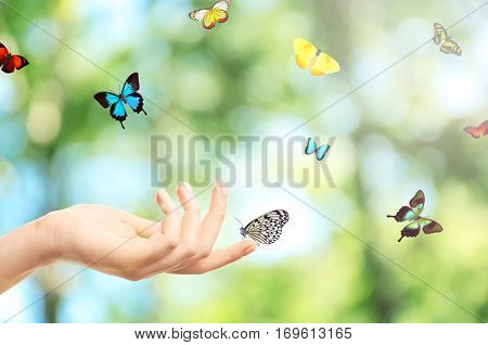 Female hand and butterflies on blurred foliage background