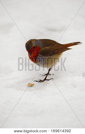 beautiful orange bird