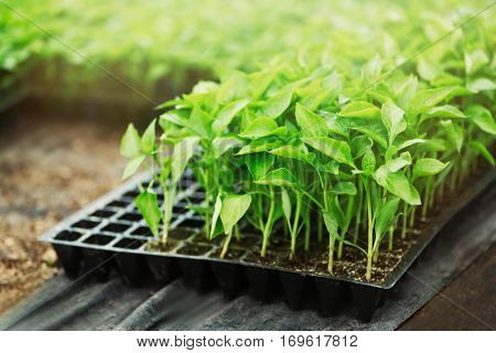 Seedlings in plastic container