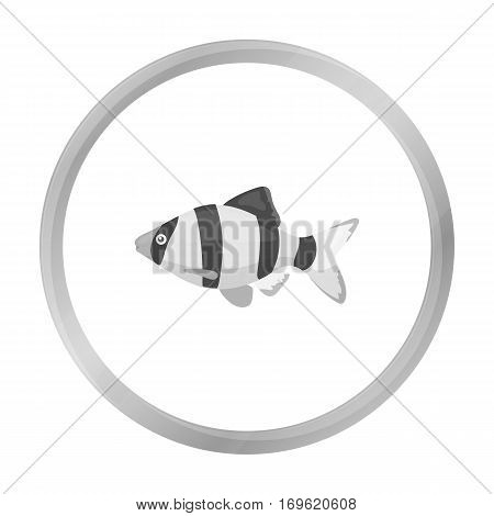 Barbus fish icon monochrome. Singe aquarium fish icon from the sea, ocean life monochrome stock vector