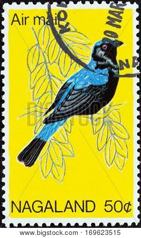 NAGALAND STATE - CIRCA 1969: A stamp printed in India shows a Asian Fairy-bluebird (Irena puella) bird, circa 1969.