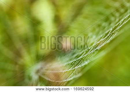 Subtle cobweb morning dew on a green background