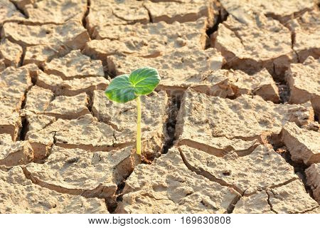 desolate land or dry areas have little green plant growth up new hopes and encouragement