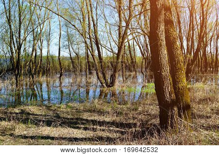 Forest spring landscape - little forest flooded with overflowing water in sunny weather. Spring landscape view in sunny day - spring landscape of sunny forest river and trees. Spring landscape forest  nature