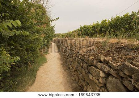 Camino de Santiago from Puente la reina to Estella