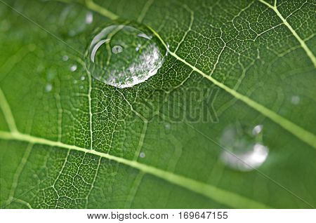 Beautiful green leaf with drops of water close up.