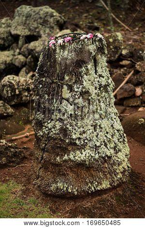 Stump of a palm tree between Holo Holo Ku Heiau and Pohaku Ho'ohanau the Royal Birthstone.
