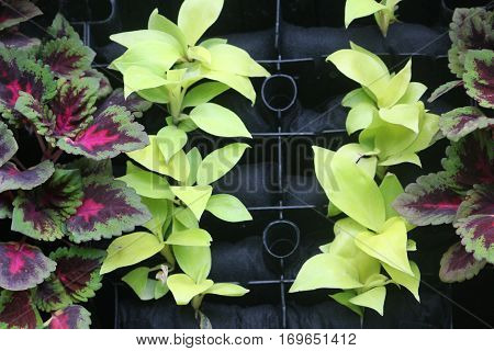 wall decorated by tiny colorful plants in the house