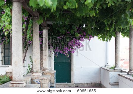 Lisbon Portugal urban europe flowers jacaranda green tree cityscape famous place portuguese capital town district history architecture buildings