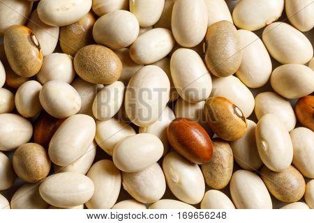white bean raw food ingredient texture macro close up detailed