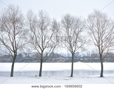 Winter landscape with trees on outskirts of St. Petersburg Russia.