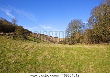 Grazing Pasture With Trees