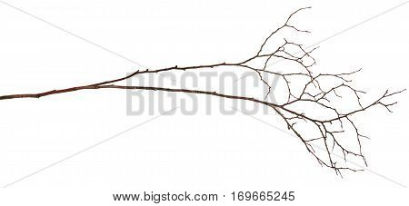 Dry twig isolated on a white background