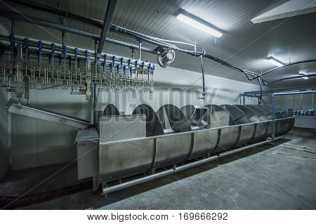 plant for processing poultry at the poultry farm in the industry