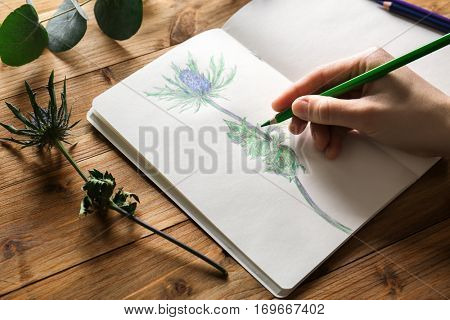 Female hand drawing plant in sketchbook on wooden background