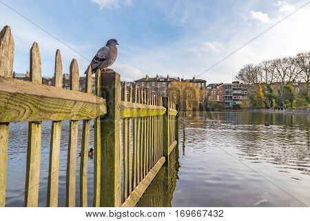 Old wooden fence full of moss inside of the lake in a british park with a pigeon sitting on top of it.