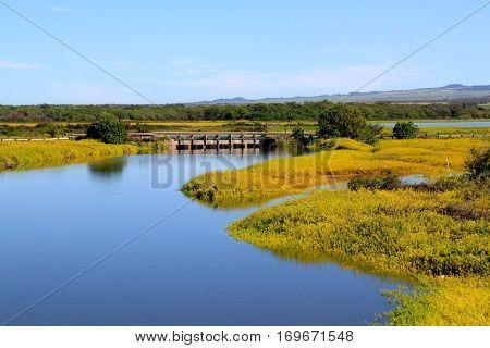 Beautiful lagoon with yellow and green grass in Maui, Hawaii