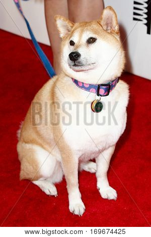 NEW YORK-MAY 19: Doge, the Shiba Inu dog attends the 18th Annual Webby Awards at Cipriani Wall Street on May 19, 2014 in New York City.
