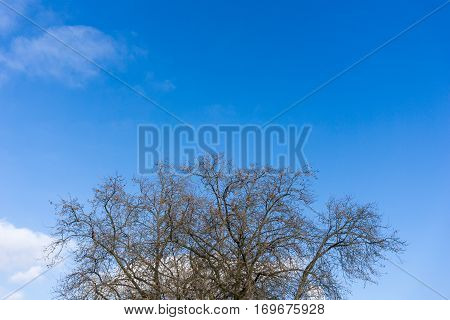 Treetops in front of a clear sky