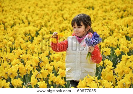 Happy kid with spring flowers on yellow daffodils field, little girl on vacation trip in Netherlands