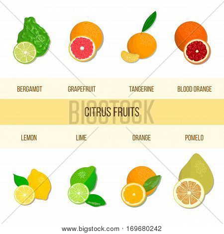 Collection of realistic citrus. Bergamot, lemon, grapefruit, lime, mandarin, pomelo, orange, blood orange. Vector set of whole fruits and slices. for cosmetics prints textile perfume aromatherapy