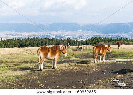 Crowded Horse farm at highland