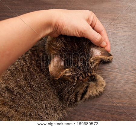 Ringworm In Cat