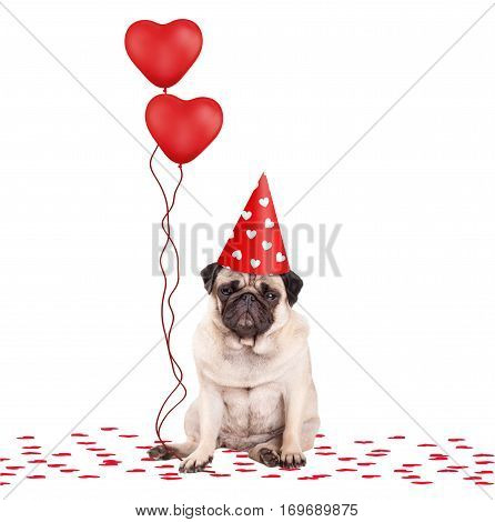 lovely cute pug puppy dog sitting down on confetti wearing party hat and holding red heart shaped balloons isolated on white background