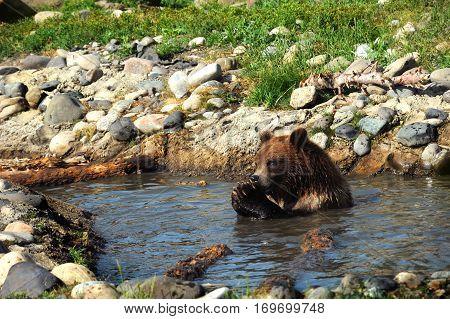 Bear Praying