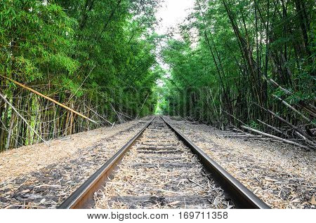 Train Track Passing Through Bamboo Forest