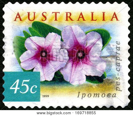 AUSTRALIA - CIRCA 2003: A used postage stamp from Australia depicting an image of a Ipomoea flower circa 2003.