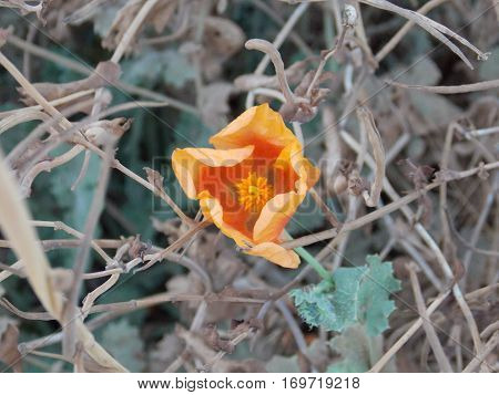 a yellowish and orange flower in autumn